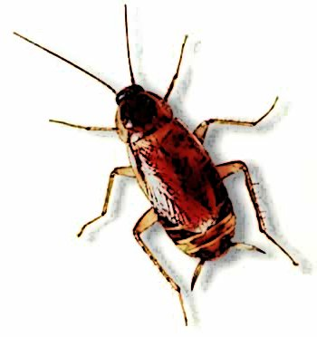 the cockroach essay